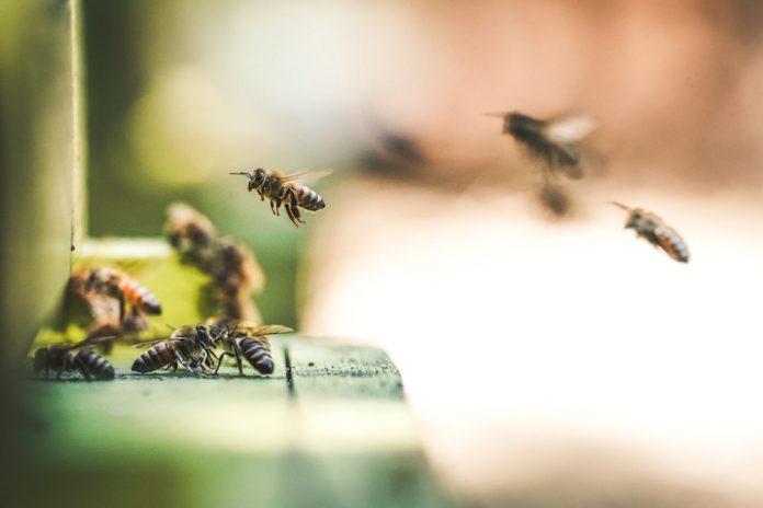 apicoltura come iniziare