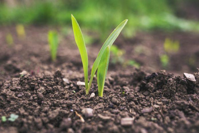 esonero contributivo per i lavoratori agricoli