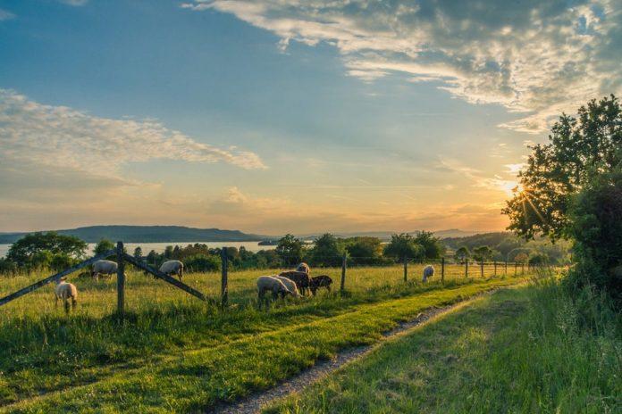 Svizzera fattorie